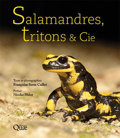 Salamanders, newts and Co. - Françoise Serre Collet - Éditions Quae