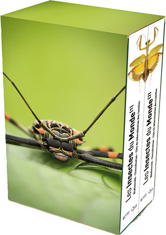 Insects of the world -  - Éditions Quae